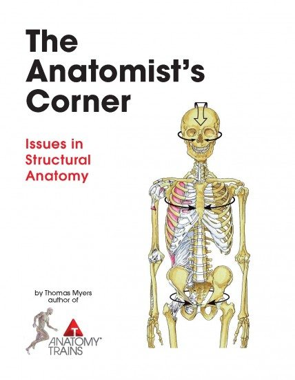the anatomist's corner issues in structural anatomy by tom myers