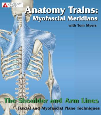 Technique Series: The Shoulder & Arm Lines