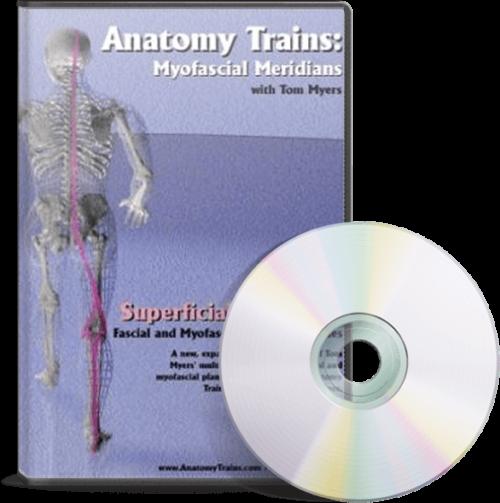 Technique Series: Superficial Back Line