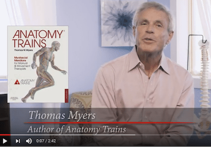 Anatomy Trains Dynamic Education For Body Minded Professionals