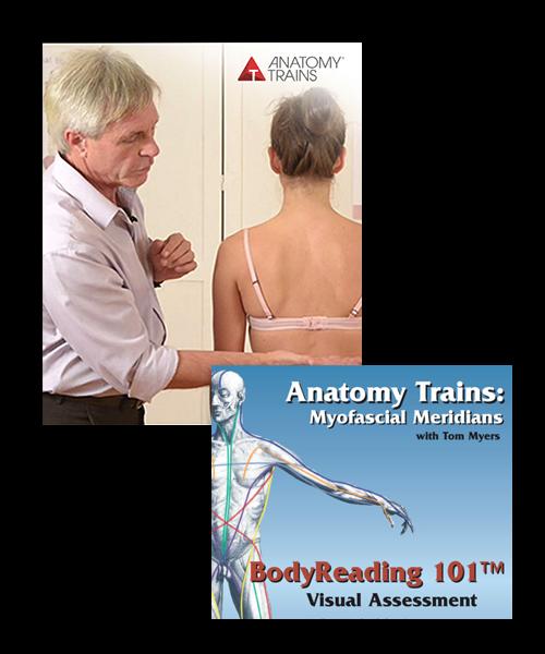 BodyReading: Visual Assessment of the Anatomy Trains Webinar Series & BodyReading 101