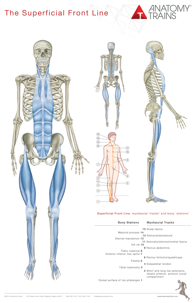 Anatomy Trains 3rd Edition Book & Posters - Thomas W. Myers