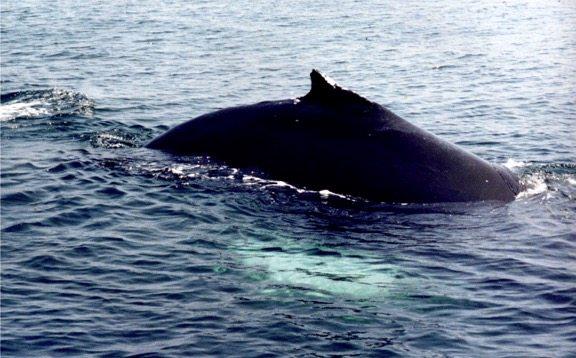 Whale 11