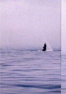Whale 12