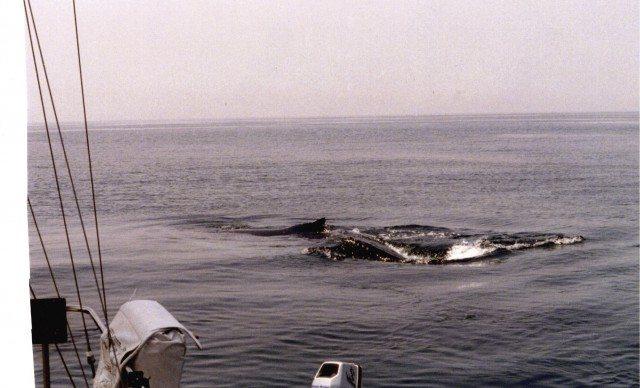 Whale 6