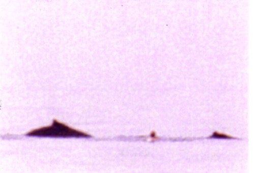 Whale 9