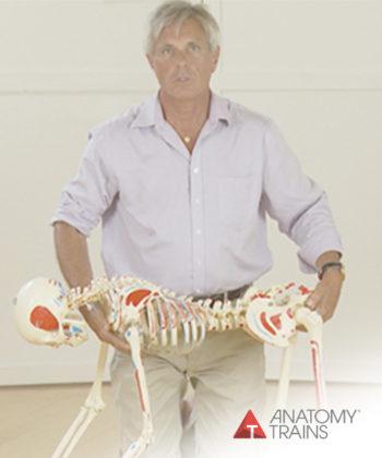 The Science of Bodywork #1: Unfolding Evolution
