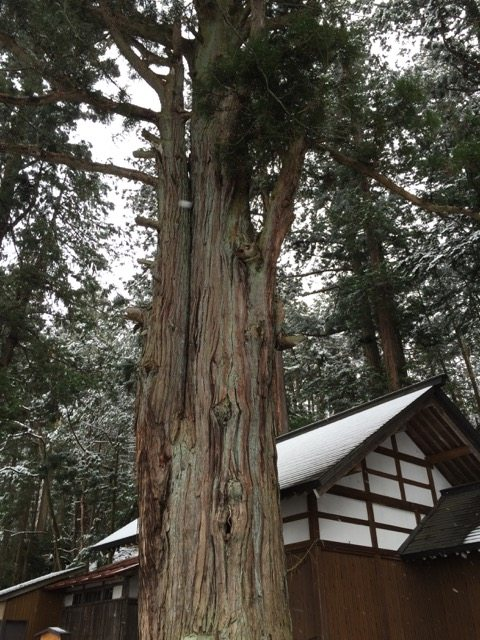 Japanese Buddhism Tree