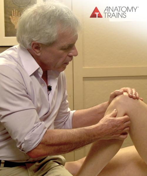 Understanding Feet and Legs