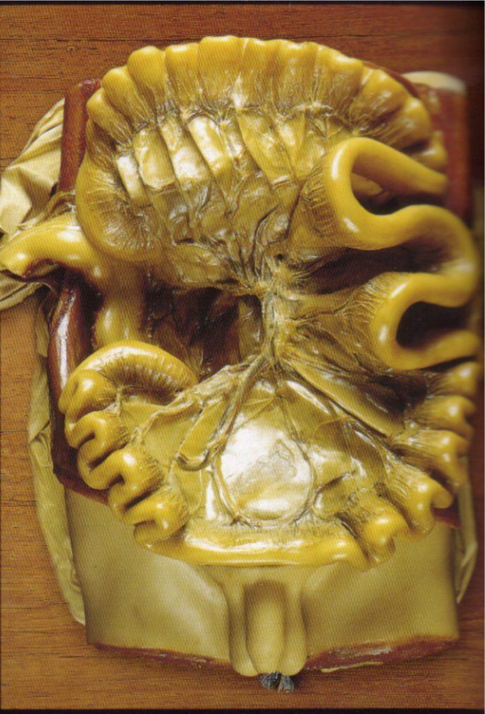 mediastinum contains what organs