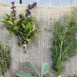 Soothing Fresh Maui Lavender