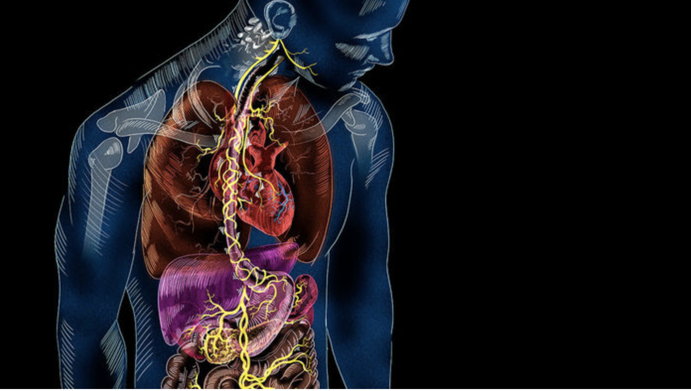 New Findings on the Gut-Brain Connection - Tom Myers Observations
